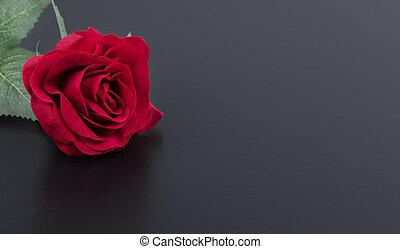バラ, 単一, の上, 赤, 終わり