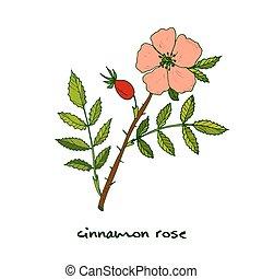 バラ, 植物, シナモン, 薬効がある