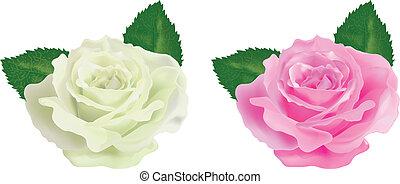 バラ, 白い背景, 現実的