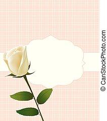 バラ, 白, カード, 招待