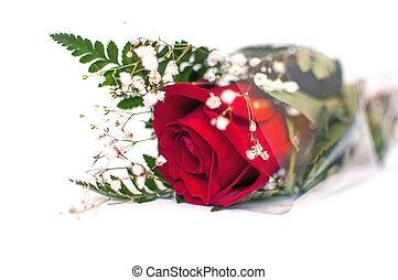 バラ, 白, -, 赤い背景