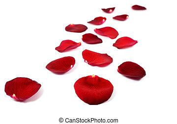 バラ, 白, 隔離された, 赤, 花弁