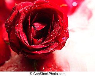 バラ, 花, 煙