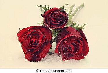 バラ, 花, 色, フィルター, reto