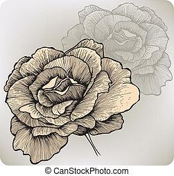 バラ, 花, hand-drawing., ベクトル, illustration.