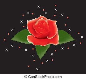 バラ, 葉, 赤