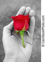 バラ, 赤, 手