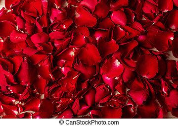 バラ, 赤, 花弁