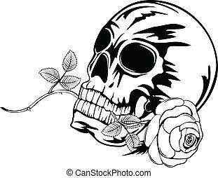 バラ, 頭骨