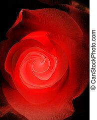 バラ, 黒い赤