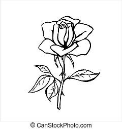 バラ, 黒, sketch., アウトライン