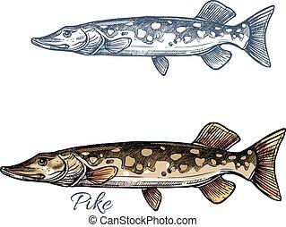 パイク, スケッチ, pickerel, fish, デザイン, 釣り