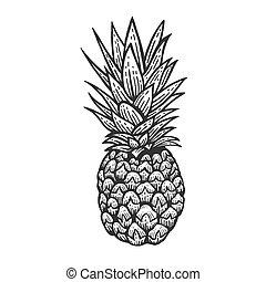 パイナップル, illustration., ベクトル, フルーツ, スケッチ, image., スタイル, 黒, 彫版, 白, エキゾチック, 板, imitation., 手, 引かれる, かきなさい