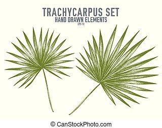 パステル, trachycarpus, コレクション, 手, ベクトル, 引かれる