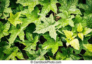 パターン, の, 緑の葉, 背景