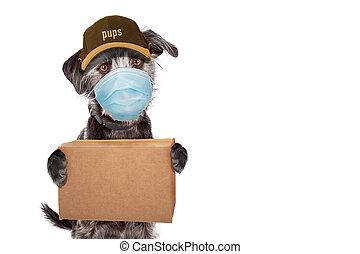 パッケージ, 顔, 渡すこと, 身に着けていること, 面白い, マスク, 犬