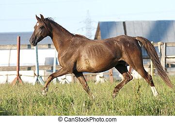 パドック, 馬