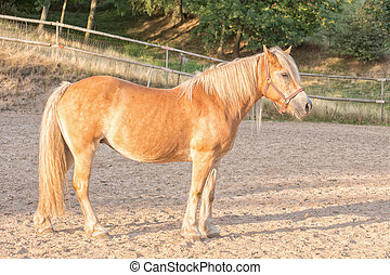 パドック, 馬, 肖像画