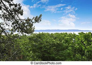 パノラマの光景, の, 湾, の間, サマータイム, ワシントン州
