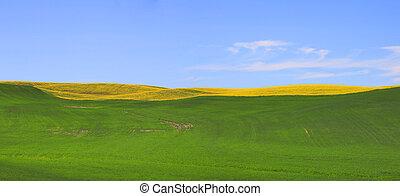パノラマの光景, の, 牧草地