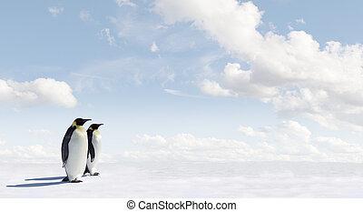 パノラマ, ペンギン