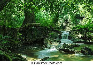 パノラマ, 光景, の, すてきである, 滝, そして