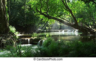 パノラマ, 光景, の, すてきである, 滝, そして, 池, 中に, 緑, tropic, 環境