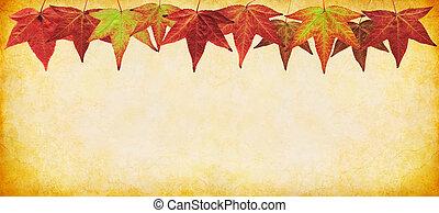 パノラマ, 葉, 秋