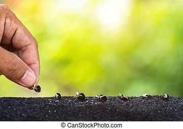 パパイヤ, 保有物, 自然, 土壌, 木, 若い, 手, 種, 成長, 背景, 準備ができた, 緑
