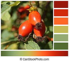 パレット, swatches., 色, briar, berries., 無料
