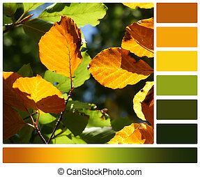 パレット, swatches, 色, leaves., 秋, ブナ, 無料