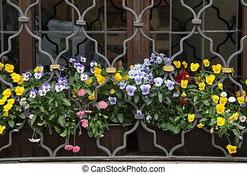 パンジー, 美しい, 花, -, 夏