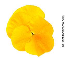 パンジー, 黄色