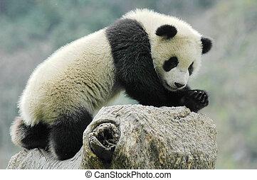 パンダ, 幼獣