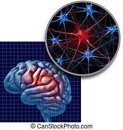パーキンソン, 概念, 解剖学, 脳