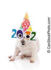 パーティー, 新年, 祝いなさい, 2012