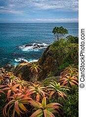 パー, ポイント, 太平洋, 湾, 海洋, 三日月, 花, 光景
