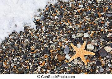 ヒトデ, 上に, 石, 海岸