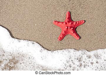 ヒトデ, 海洋, トロピカル, 波, 浜, 砂