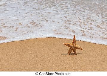 ヒトデ, 非常に, 波, 到来, 前部, 終わり, 浜