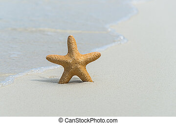 ヒトデ, sand., 砂, トロピカル, 海, 浜, 光景
