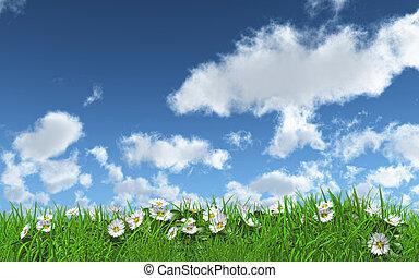 ヒナギク, 中に, 草, 上に, a, よく晴れた日