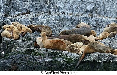 ビーグル犬, ライオン, patagonian, 海, 植民地