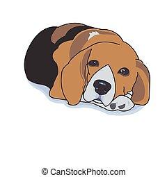 ビーグル犬, 眠い