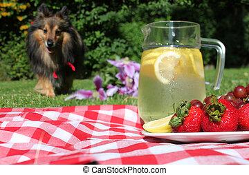 ピクニック, レモネード, 犬
