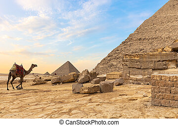 ピラミッド, らくだ, desert:, エジプト人