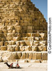 ピラミッド, 背景, らくだ