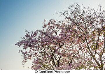 ピンクのトップ, ツリーの森林, 背景, 花