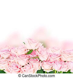 ピンクのバラ, 咲く