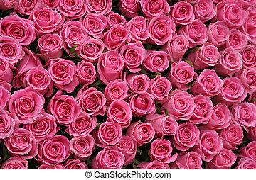 ピンクのバラ, 背景